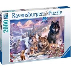 Puzzle 2000 pièces - Loups...
